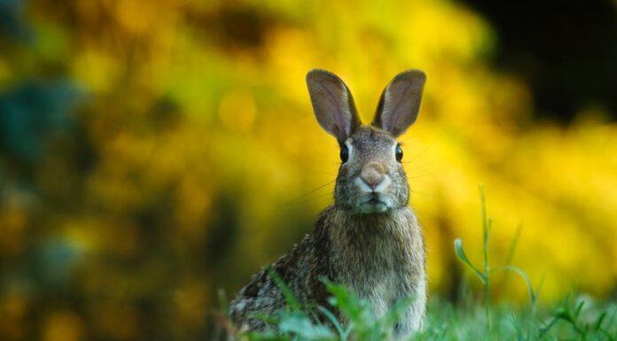 vigtige teknologier til kanin